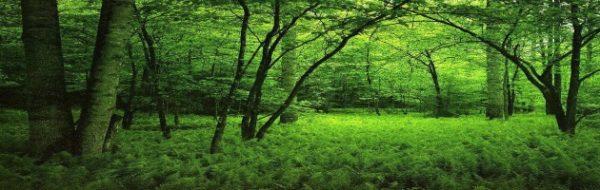 La FYME, comprometida con el cuidado a la Tierra en el Día Mundial del Medio Ambiente
