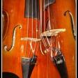 Yuval Adereth: Violines por la Paz, 'Violins'